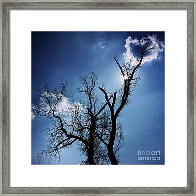 Silhouette Of Old Tree Branches Against Blue Sky Backlit Framed Print by Bernard Jaubert