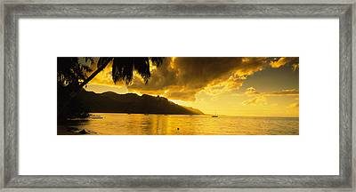 Silhouette Of Palm Trees At Dusk, Cooks Framed Print by Panoramic Images