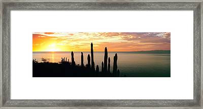 Silhouette Of Pitaya Cactus Framed Print