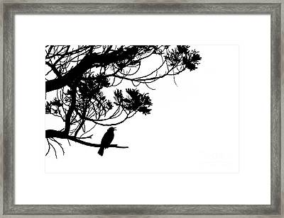 Silhouette Of Singing Common Blackbird In A Tree Framed Print by Stephan Pietzko