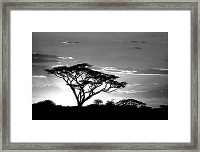 Silhouette Of Trees In A Field Framed Print