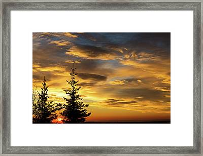 Silhouette Of Two Evergreen Trees Framed Print by Michael Interisano