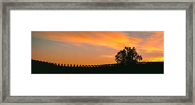 Silhouette Of Vineyard At Sunset, Paso Framed Print by Panoramic Images
