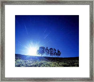 Silhouette With Trees In Sparse Field Framed Print by Panoramic Images