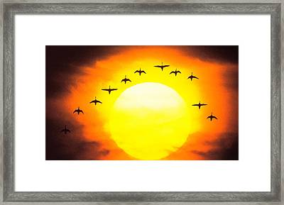 Silhouetted Birds In Sunset Framed Print
