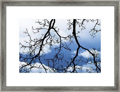 Silhouetted Branches Against A Stormy Framed Print