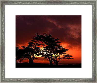 Silhouetted Cypresses Framed Print