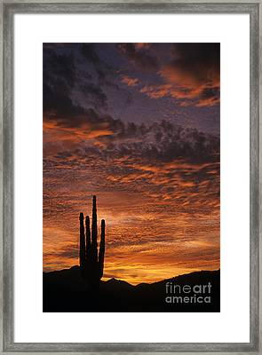 Silhouetted Saguaro Cactus Sunset At Dusk With Dramatic Clouds Framed Print