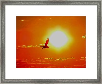 Silhouetted Seagull  Framed Print by Stephen Melcher