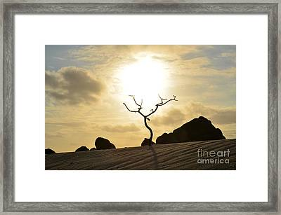 Silhouetted Tree At Dawn In Aruba Framed Print