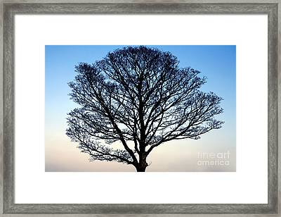 Silhouetted Tree Framed Print