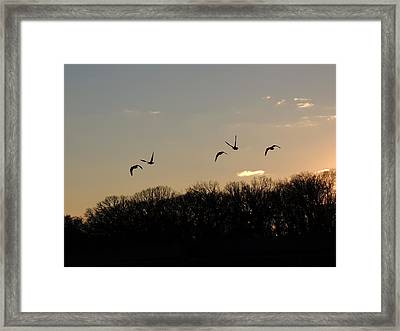 Silhouettes At Dusk Framed Print
