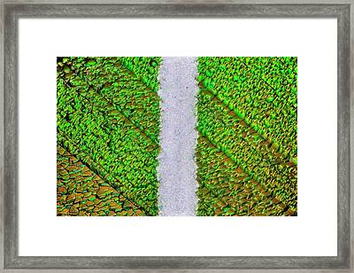 Silicon Solar Cell Framed Print