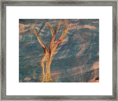 Silk Trees Framed Print by Aliceann Carlton