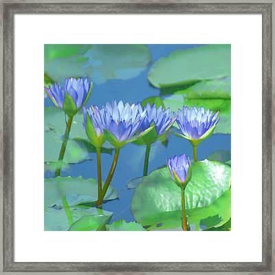 Silken Lilies Framed Print