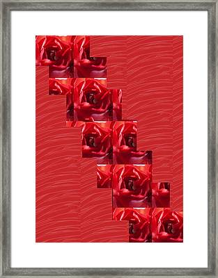 Framed Print featuring the photograph Silken Red Sparkles Redrose Across by Navin Joshi