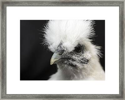 Silkie Chicken Portrait Framed Print