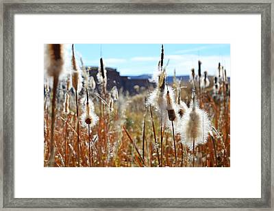 Silky Cat's Tails Framed Print