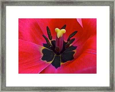 Silky Elegance Framed Print by Frozen in Time Fine Art Photography