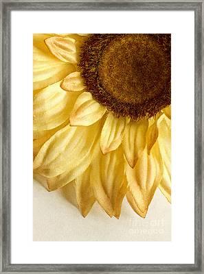Silky Sun Framed Print by Margie Hurwich