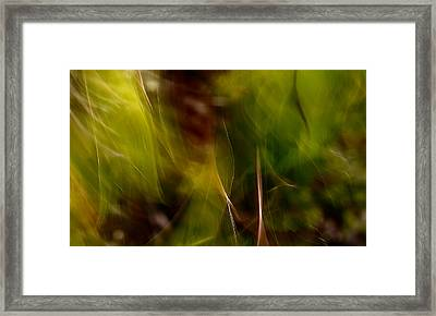Silky Thoughts Framed Print