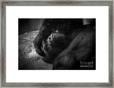 Deep In Thought Of Freer Times Framed Print