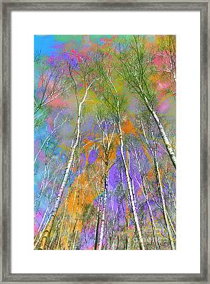 Silver Birch Framed Print by Michelle Orai