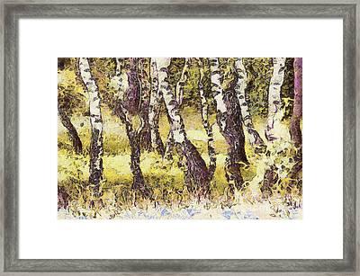 Silver Birch Framed Print by Odon Czintos
