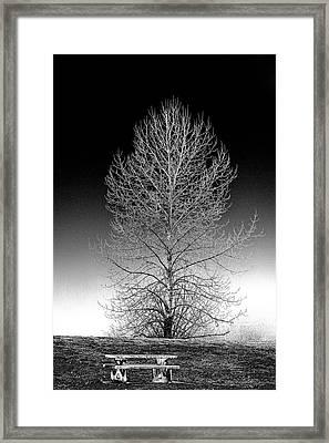 Silver Birch Framed Print by Phil Dyer