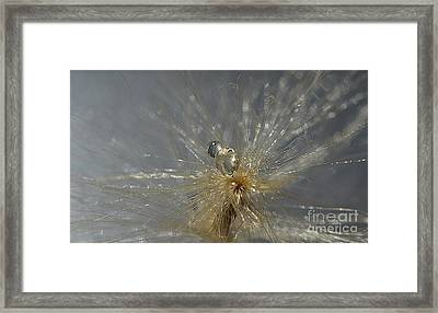 Silver Drops Framed Print by Michelle Meenawong