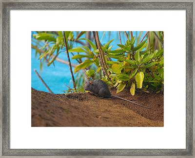 Silver Eyed Mouse Framed Print by Sarah Crites