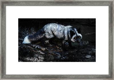 Silver Fox Framed Print by Tracy Munson