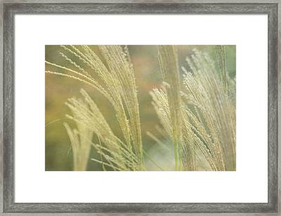 Silver Grass Framed Print