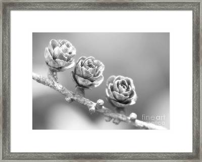 Silver Lining.... Framed Print