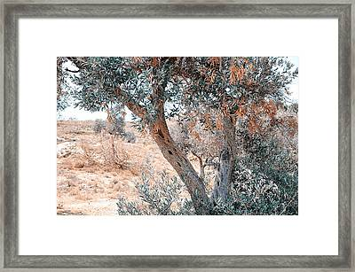 Silver Olive Trees. Nature In Alien Skin Framed Print