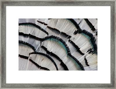 Silver Pheasant Feather Fan Design Framed Print