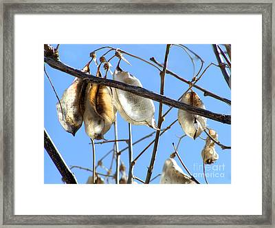 Framed Print featuring the photograph Silver Pods by Alexandra Jordankova