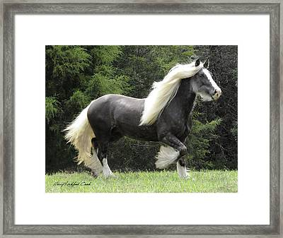 Silver Reign Framed Print by Terry Kirkland Cook