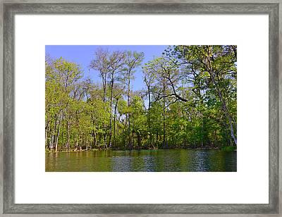 Silver River Florida Framed Print by Christine Till