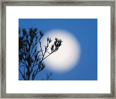 Framed Print featuring the photograph Silver Sage by Jim Garrison