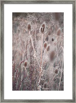 Silver Shades Of Wild Grass 2 Framed Print