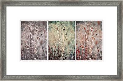 Silver Shades Of Wild Grass. Triptych Framed Print by Jenny Rainbow