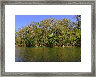 Silver Springs - Old-style Florida Framed Print by Christine Till