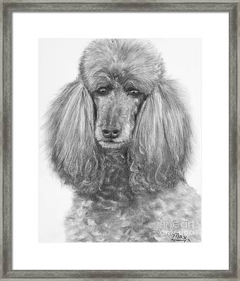 Silver Standard Poodle Drawing Framed Print by Kate Sumners