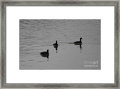 Silver Swim Framed Print by Erica Hanel