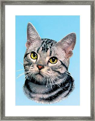 Silver Tabby Kitten Original Painting For Sale Framed Print by Bob and Nadine Johnston