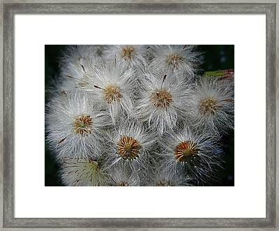Silver Threads Framed Print by Nick Kloepping