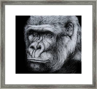 Silverback - A Drawing Framed Print