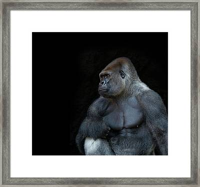 Silverback Gorilla Portrait In Profile Framed Print by Haydn Bartlett Photography