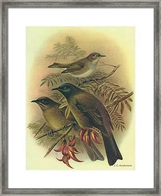 Silvereye And Bellbird Framed Print by Rob Dreyer
